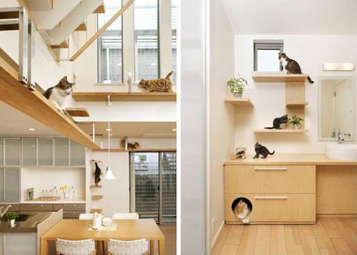 дизайн квартиры для владельцев животных